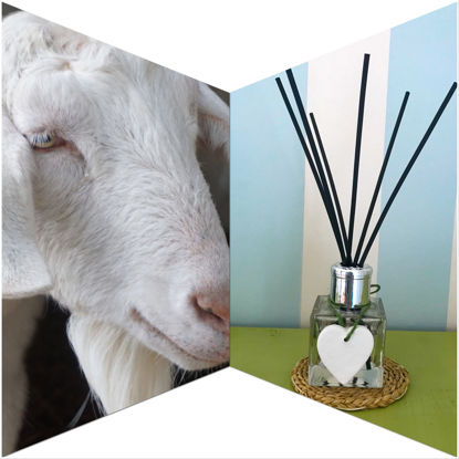 Heidi's Hedgerow Reed Diffuser